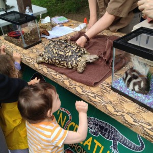Kids and a Tortoise