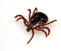 Safety Message: Be Smart About Ticks