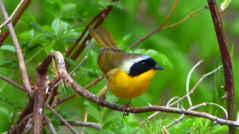 Spring Birding in the Fells