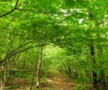 A Forest for the Future