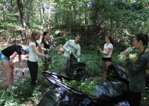 Tufts University students clearing invasive Burning Bush from Virginia Wood