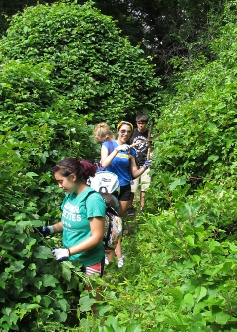 Incoming Tufts University Students Volunteer in the Fells