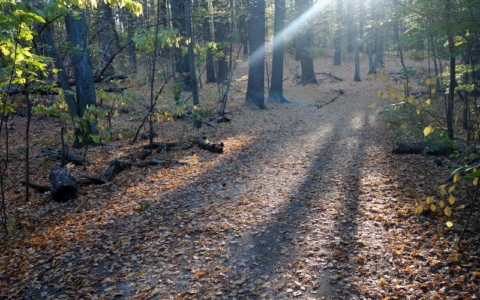Trail Adopters Adapting