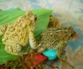 Toads and Their Mysterious Minds