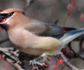 Autumn Bird Watching with Winchester Trails