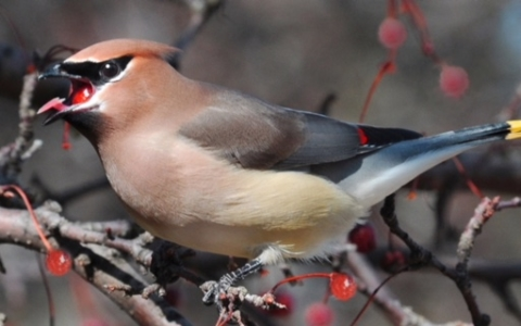 Autumn Bird Watching with Winchester Trails