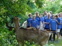 Stoneham Volunteers Goat