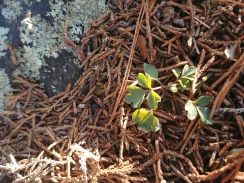 Winter Botany: Wildflowers in Winter