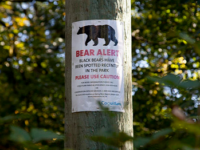 BlackBear_Warning_Sign