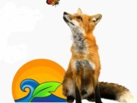 Fox monarch Pledge-cropped