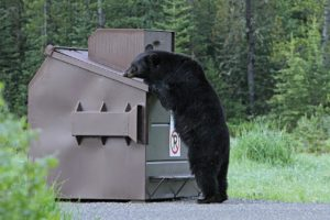 black_bear_in_dumpster