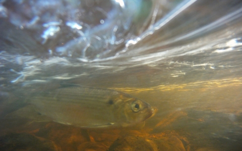THIS WEDNESDAY:  Learn to Fish with Mass Wildlife's Jim Lagacy