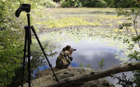 Creation of the Middlesex Fells and the Metropolitan Park System:  A Documentary Film