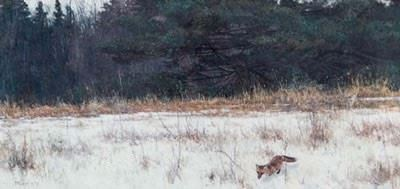 Meet Your Wild Neighbors with Naturalist Bob Metcalfe!
