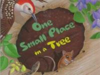 StoryWalk--OneSmallPlace