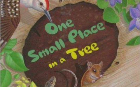 UPDATE 8/08:  Middlesex Fells Summer StoryWalk®:  One Small Place In a Tree